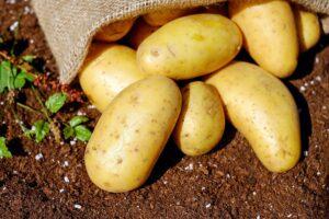 Kdy vysadit brambory